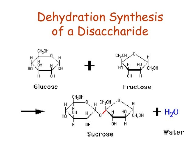 "dehydration sysnthesis Dehydration results in the formation of a ""betane,"" which is a tetrahydro-trigonelline (see betane) dehydration by diet is very valuable under certain circumstances when the dropsy 591 is other than renal."