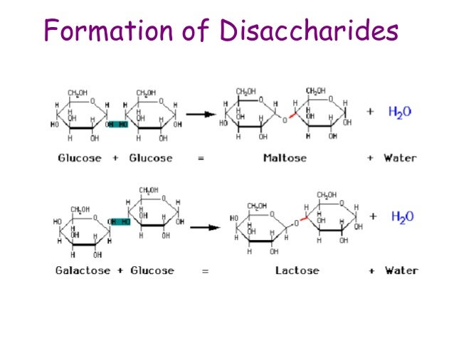 Dehydration sythesis