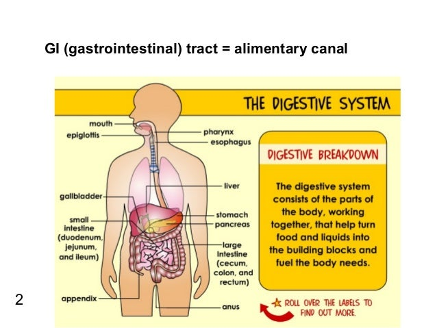 an introduction to the analysis of the human digestive system Overview of the digestive system - explore from the merck manuals - medical consumer version.
