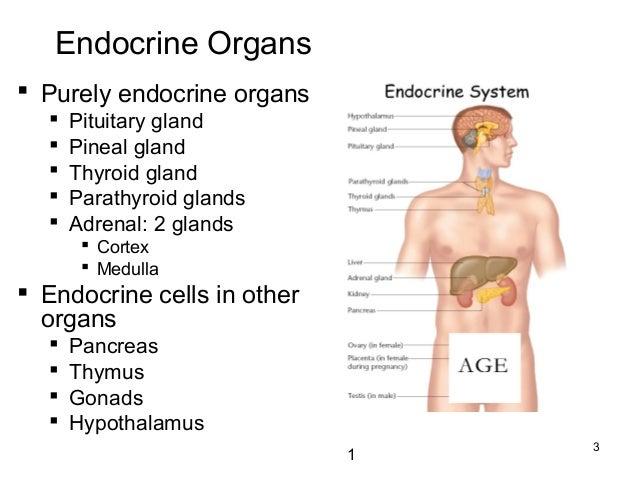 B.Sc.(Micro+Biotech) II Animal & Plant Physiology Unit 3.2 Endocrine …