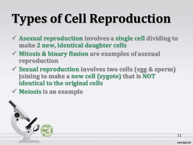 cellular reproduction This worksheet can be can be used for practice, review, assessment, homework, and test preparation.