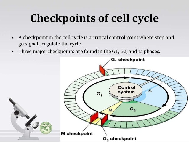 Cell cycle research papers