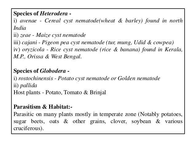Species of Heterodera - i) avenae - Cereal cyst nematode(wheat & barley) found in north India ii) zeae - Maize cyst nemato...