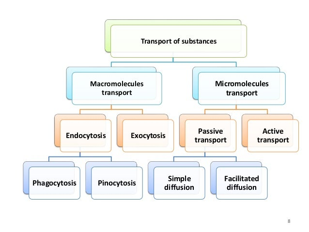 B microbiologybiotech ii cell biology and genetics unit 3 cell t transport ccuart Gallery