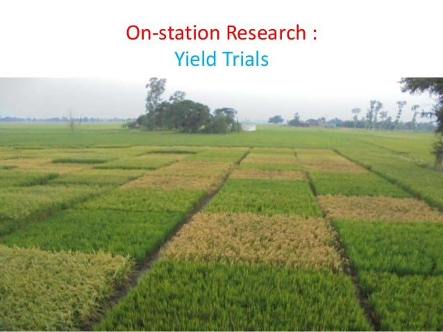 thesis on aerobic rice Effect of nitrogen sources on aerobic rice production under various rice soil eco systems  rice cropping system phd thesis, tamil nadu agric univ,.