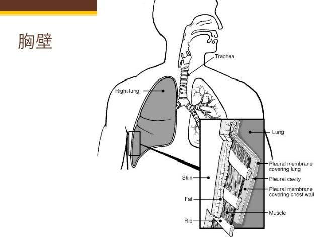 B 5 肺エコー Slide 3