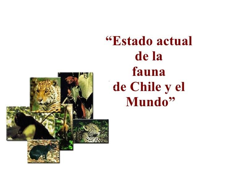 """"""" Estado actual  de la  fauna  de Chile y el  Mundo"""""""