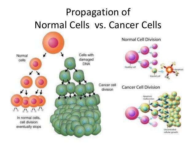 Hallmarks of Cancer - Sustained Proliferative Signaling