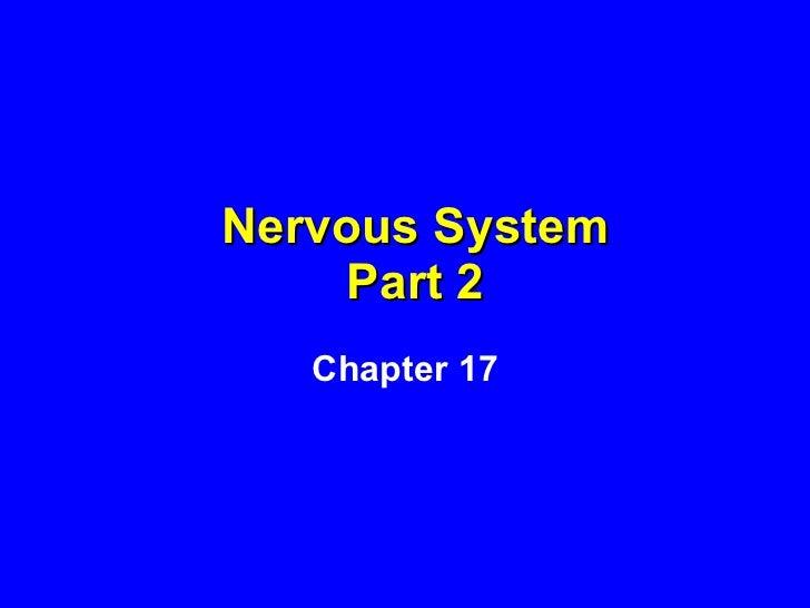 Nervous System Part 2 Chapter 17