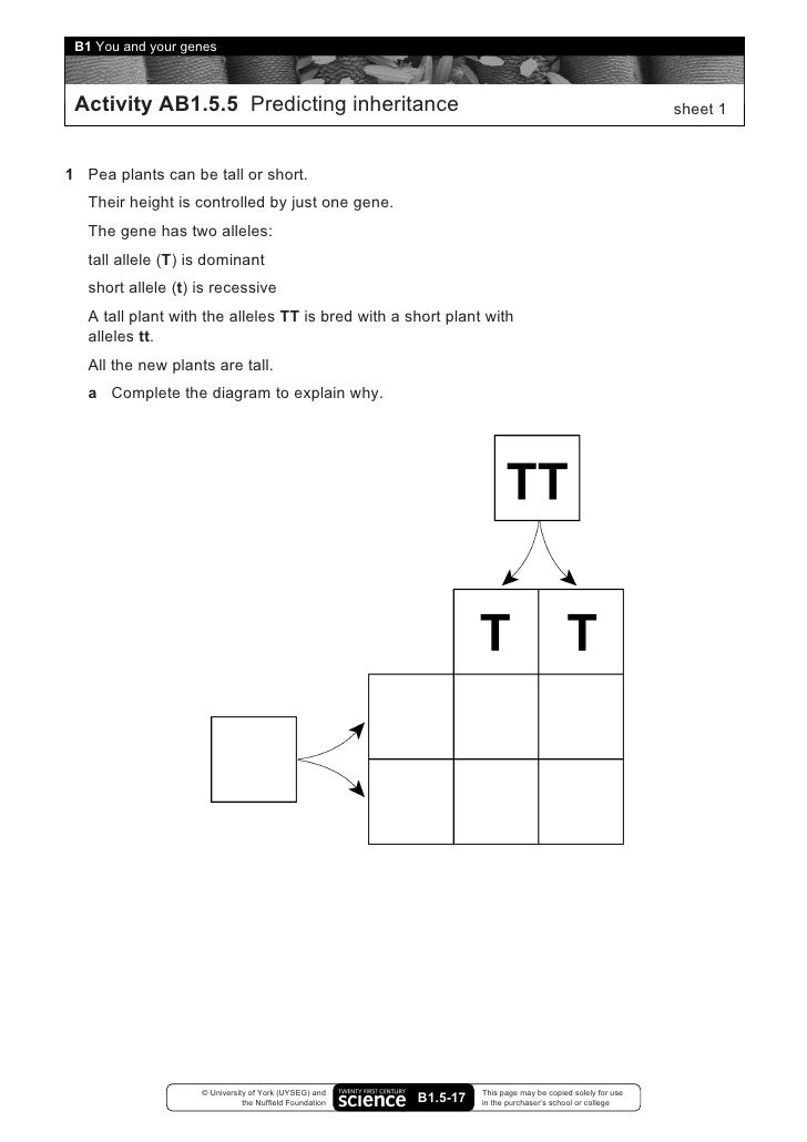B1 you and your genes worksheets