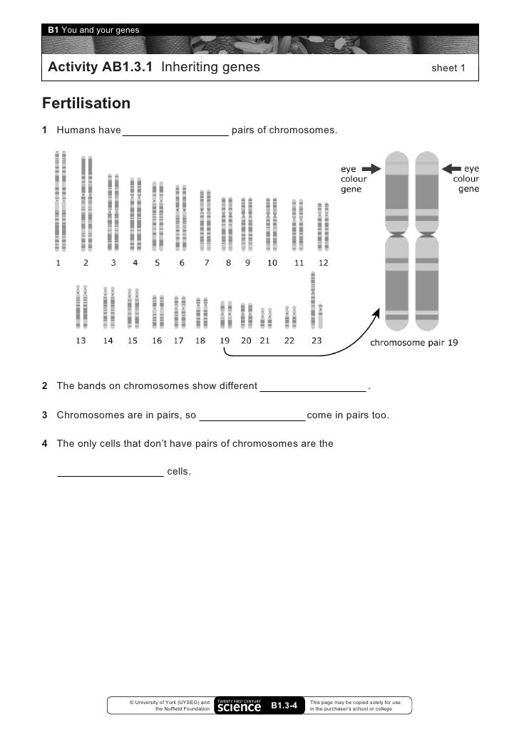 Chapter 11 Dna And Genes Worksheet Answers. Worksheets