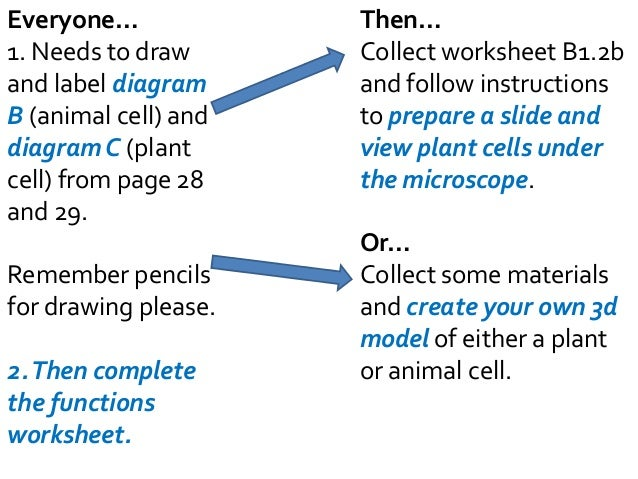 B21 Plant and Animal cells – Comparing Plant and Animal Cells Worksheet