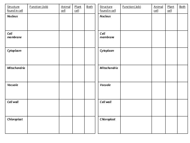 B21 Plant and Animal cells – Cell Function Worksheet