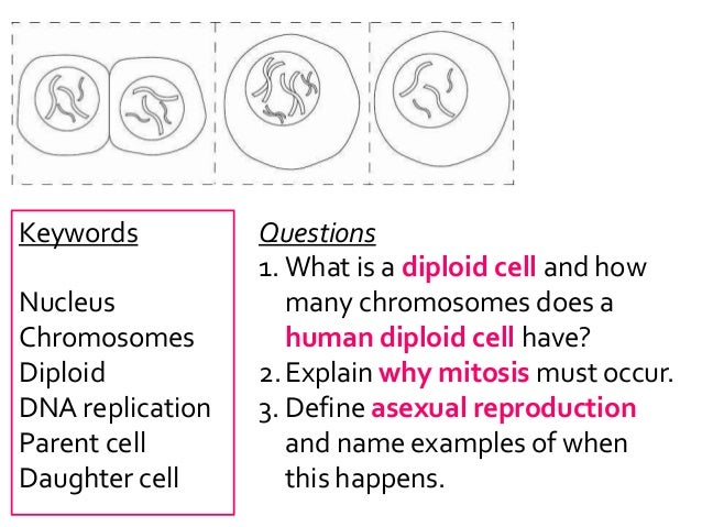 how many chromosomes are in a human sex cell