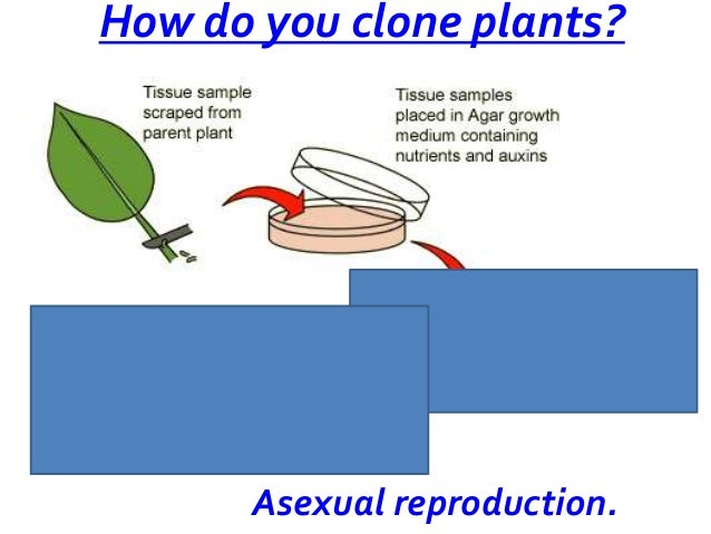 Cloning asexual reproduction definition