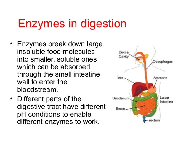 do carbohydrates have enzymes all about ketogenic diet