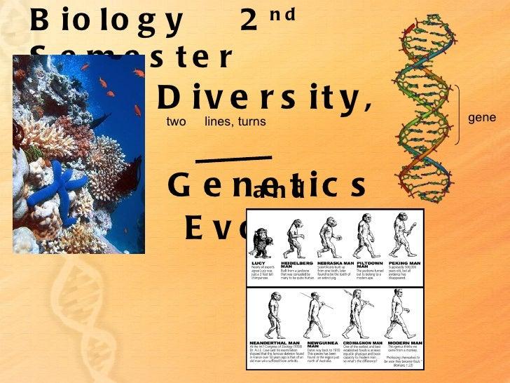 B io lo g y   2              ndS e me s te r        D iv e r s it y ,        two   lines, turns        gene         G e na...