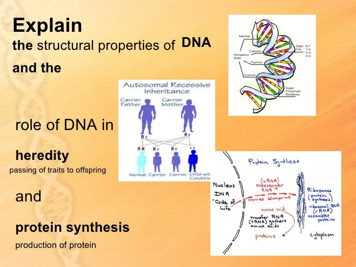 B21 big ideas protein synthesis ppt unity and diversity 7 malvernweather Choice Image