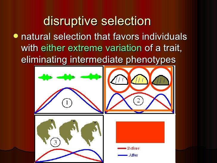 Natural Selection That Favors Intermediate Phenotypes