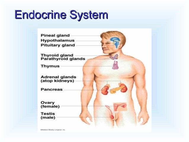 Endocrine drugs Slide 3