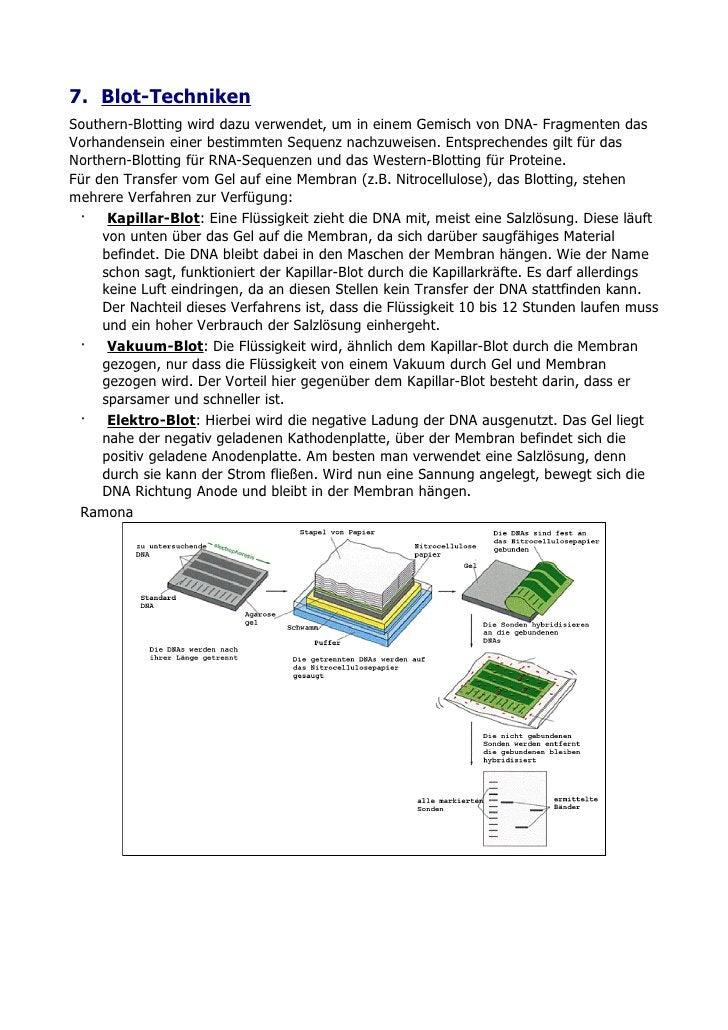 7. Blot-Techniken Southern-Blotting wird dazu verwendet, um in einem Gemisch von DNA- Fragmenten das Vorhandensein einer b...