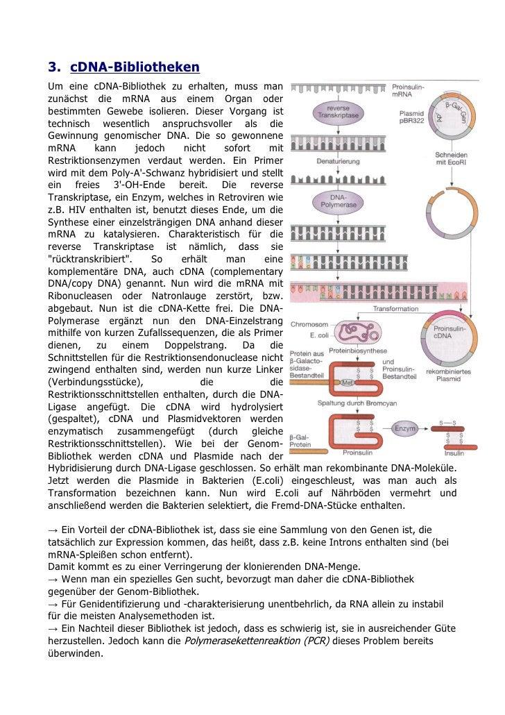3. cDNA-Bibliotheken Um eine cDNA-Bibliothek zu erhalten, muss man zunächst die mRNA aus einem Organ oder bestimmten Geweb...