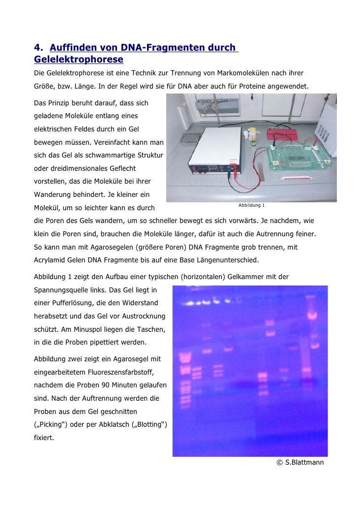4. Auffinden von DNA-Fragmenten durch Gelelektrophorese Die Gelelektrophorese ist eine Technik zur Trennung von Markomolek...