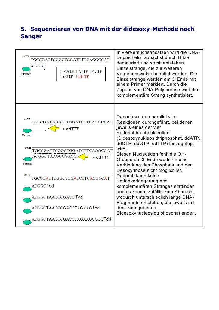 5. Sequenzieren von DNA mit der didesoxy-Methode nach Sanger                               In vierVersuchsansätzen wird di...