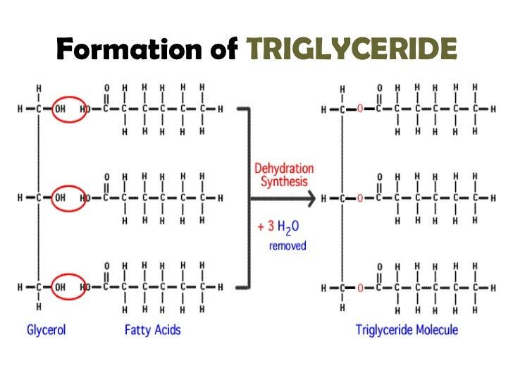 lipid hydrolysis