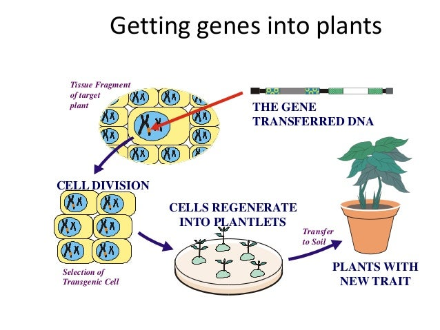 genetic engineering animal and plant Why could a genetic mutation lead to a • explain how to engineer an animal engineering plants plant genetic engineering.