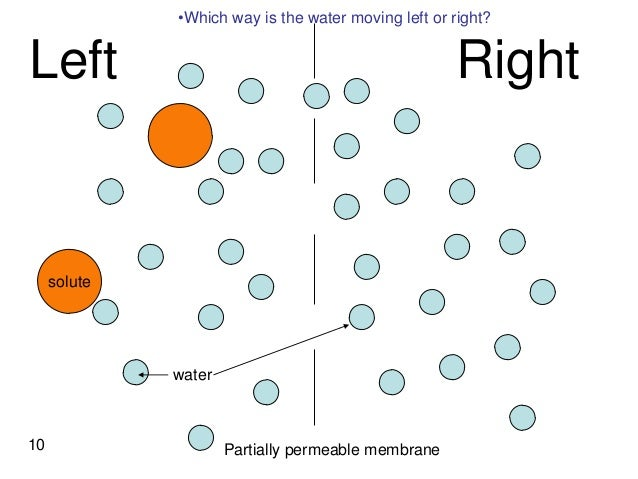Osmosis diagram gcse