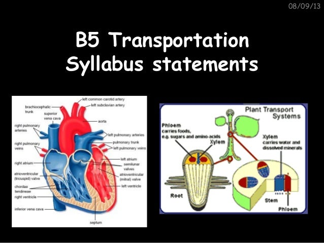 08/09/13 B5 TransportationB5 Transportation Syllabus statementsSyllabus statements