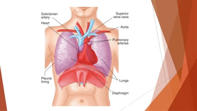 Chest, Abdominal and Genitourinary Injuries