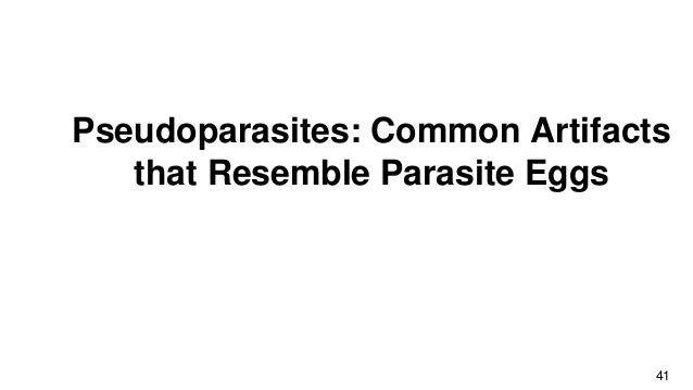 The Fantastical World of Parasites- The Beginners Guide to