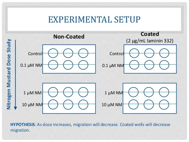 EXPERIMENTAL SETUP Control 0.1 µM NM 10 µM NM 1 µM NM Non-Coated Coated (2 µg/mL laminin 332) Control 0.1 µM NM 1 µM NM 10...