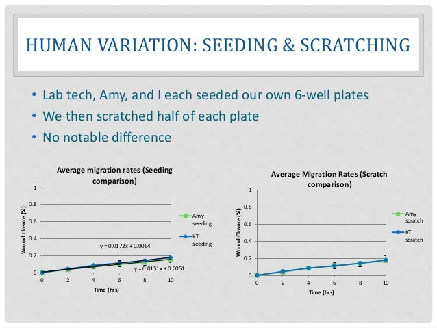 HUMAN VARIATION: SEEDING & SCRATCHING • Lab tech, Amy, and I each seeded our own 6-well plates • We then scratched half of...