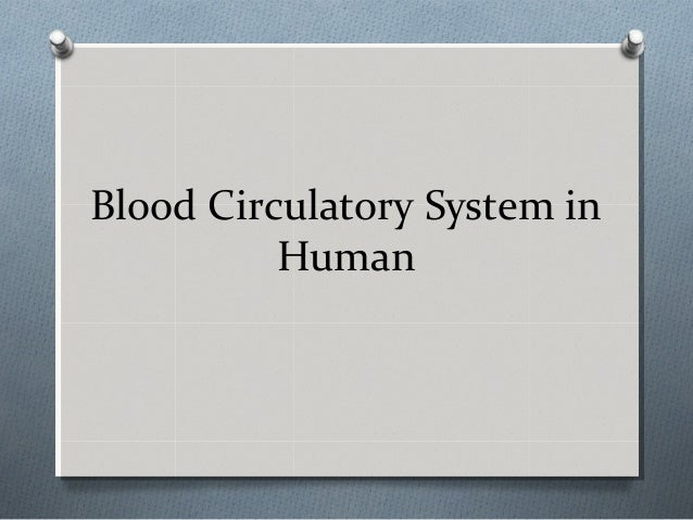 Blood Circulatory System in Human