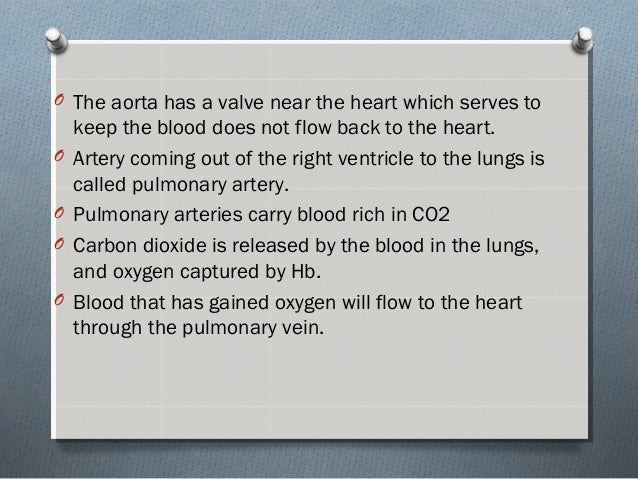 O The aorta has a valve near the heart which serves to keep the blood does not flow back to the heart. O Artery coming out...