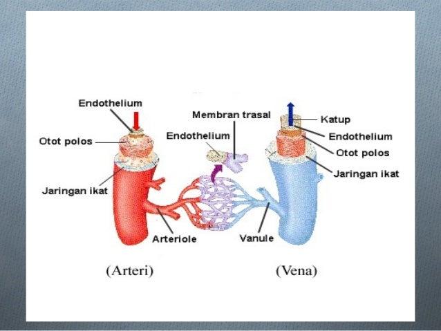 Circulation of lymph system (lymph) OLymph circulatory system consists of lymph fluid, lymph vessels and lymph nodes (lymp...