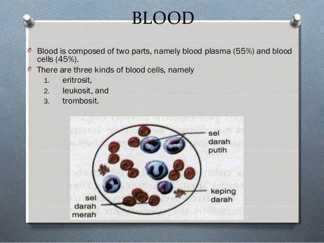 BLOOD O Blood is composed of two parts, namely blood plasma (55%) and blood cells (45%). O There are three kinds of blood ...
