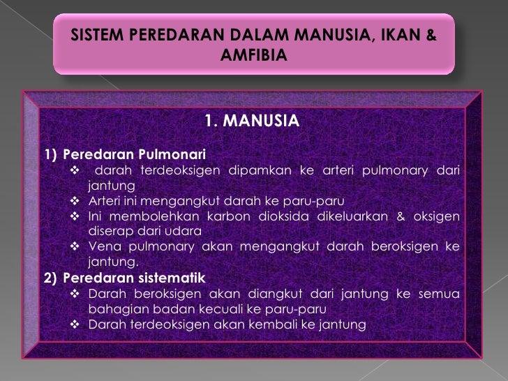 SISTEM PEREDARAN DALAM MANUSIA, IKAN &                   AMFIBIA                      1. MANUSIA1) Peredaran Pulmonari   ...