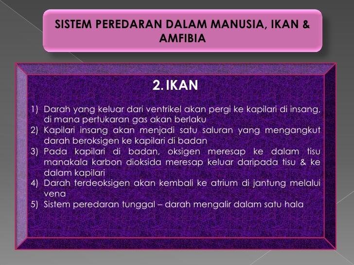 SISTEM PEREDARAN DALAM MANUSIA, IKAN &                     AMFIBIA                             2. IKAN1) Darah yang keluar...