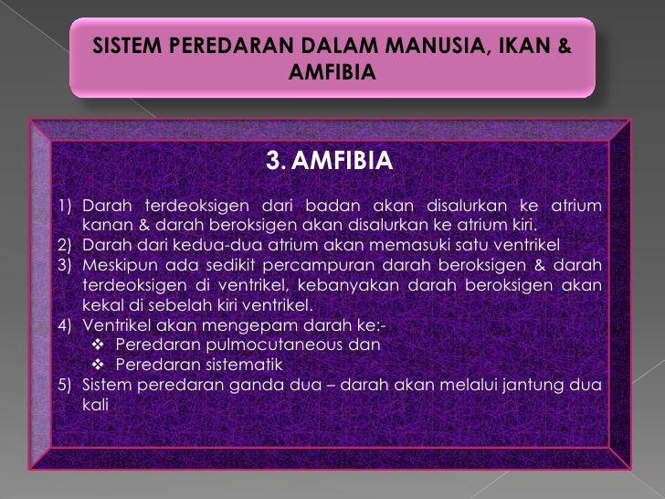 SISTEM PEREDARAN DALAM MANUSIA, IKAN &                   AMFIBIA                       3. AMFIBIA1) Darah terdeoksigen dar...
