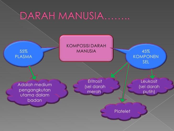 KOMPOSISI DARAH  55%              MANUSIA                        45%PLASMA                                         KOMPONE...