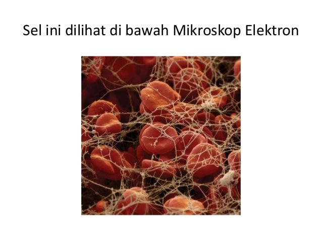Biologi Ting 4 (Bab 2 - Struktur Dan Organisasi Sel)