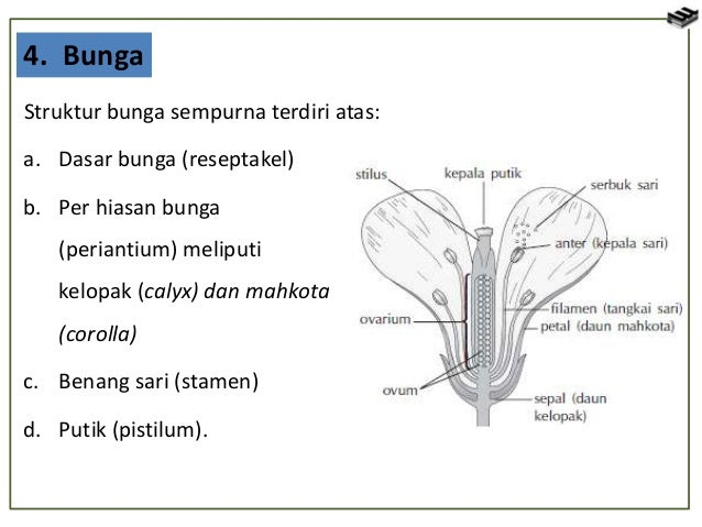 Bab 2 Jaringan Tumbuhan Dan Hewan