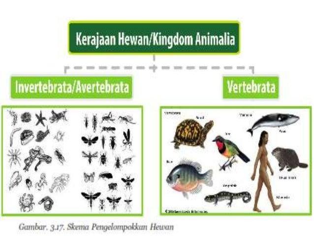 Bab 3 Klasifikasi Hewan Dan Tumbuhan