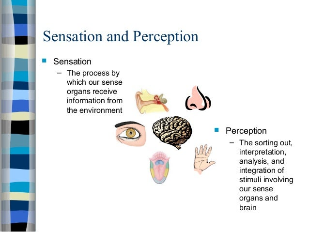 examples for relationship between sensation and perception