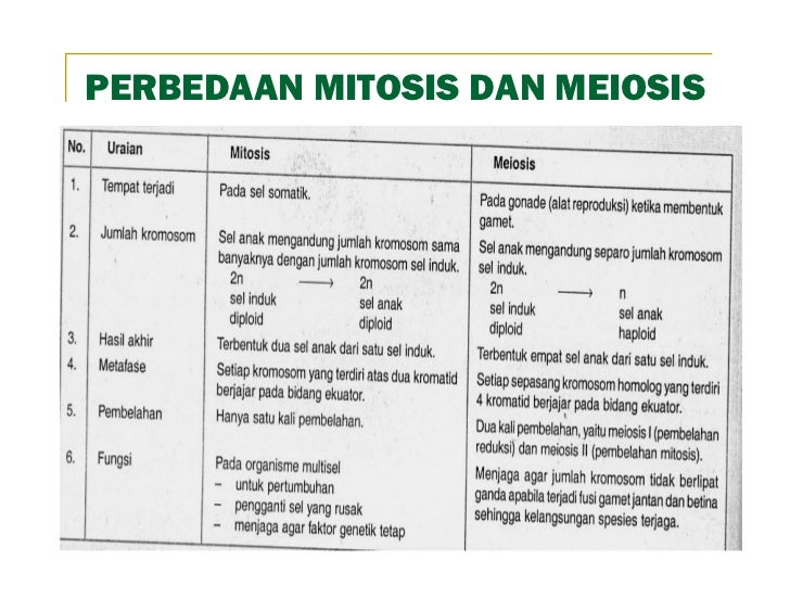 Pembelahan sel ismail sma 2 mempawah perbedaan mitosis dan meiosis ccuart Choice Image