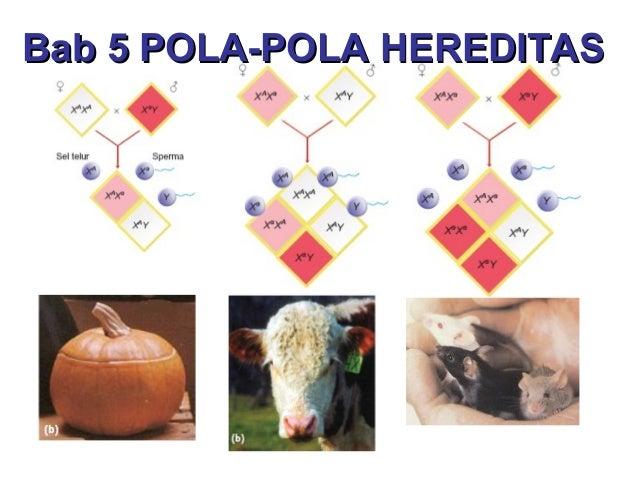 Bab 5 POLA-POLA HEREDITAS
